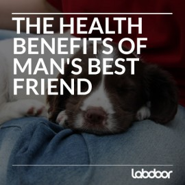 Dogs and Our Health: The Benefits of our Furry Friends